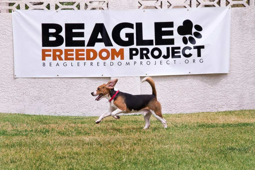Beagle Freedom Project Sign